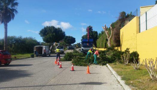 Poda y adecentamiento de árboles en Pueblo Nuevo