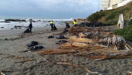 Limpieza y retirada de cañas en la playa de Torreguadiaro