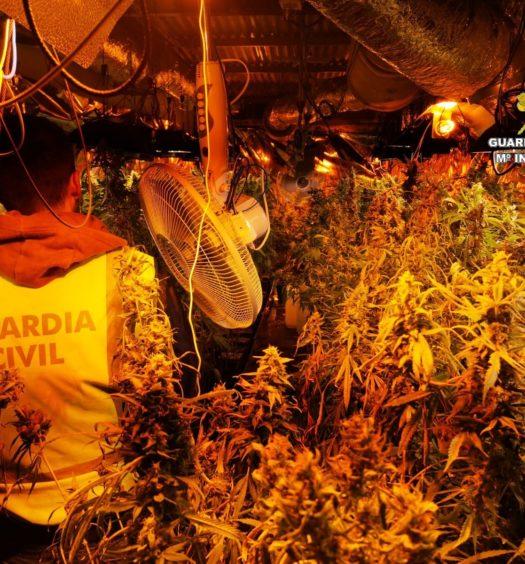 Incautación de marihuana